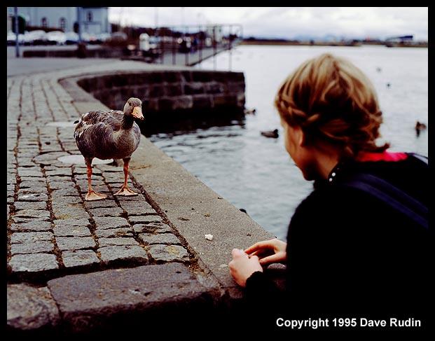 Face to Face, Reykjavik, 1995