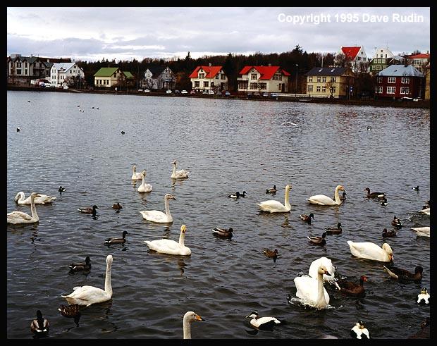Iceland95--11_05 - Rejkjavik Tjorn