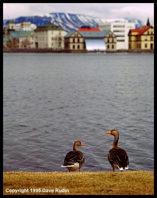 Iceland95--13_06 - Rejkjavik Tjorn