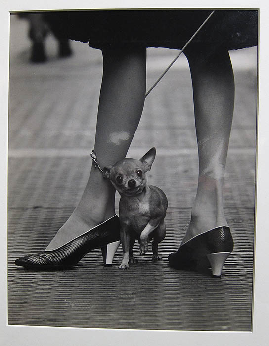 "Yale Joel's ""Chihuahua and Pappagallo Shoes"" at Janet Sirmon Fine Art"