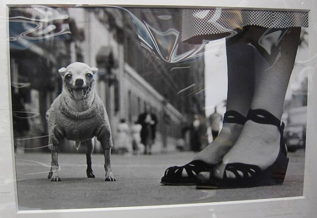 """New York (Sandals and Toy Dog)"" by Elliott Erwitt at Peter Fetterman Gallery"