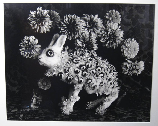 "Michiko Kon's ""Rabbit and Eyes"" at Photo Gallery International"