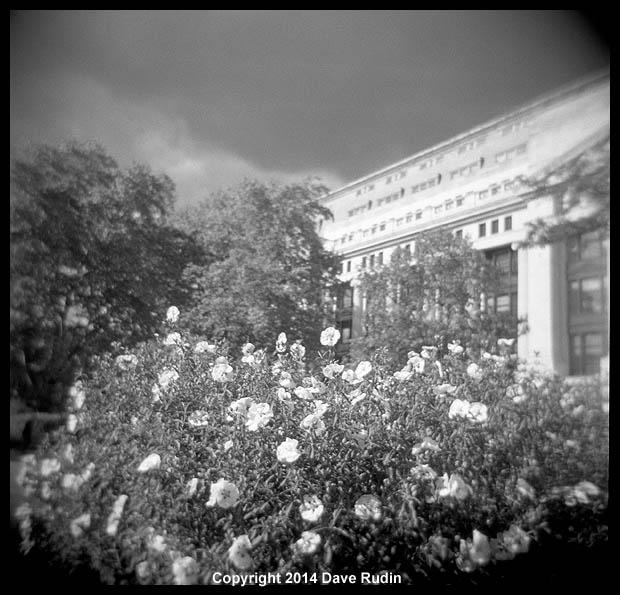 3541_11 - London flowers