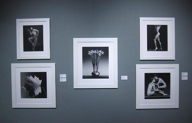 Robert Mapplethorpe prints at Weinstein Gallery