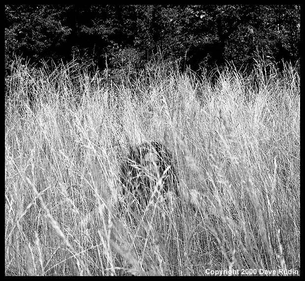 Nude, Provence, 2000